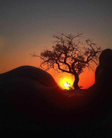 In every leaf,it was you, it was me. Stalks,Our shin. This trees were rather than us...! توى هر برگ هم تو بود، هم من بود. ساقه ها ساقِ پاى ما بودند. آن تبر حكم قتل ما را داشت، اين درختان جاى ما بودند. Popular Photos EyeEm Best Shots Sunset_collection Thinking About Life Tadda Community Eye4photography  EyeEm Best Edits Sunset Nature_collection Tree In Hands in Tehran