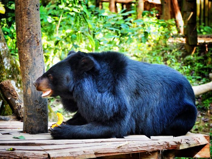 One Animal Animal Themes Animals In The Wild Animal Wildlife No People Mammal Bear BlackBear Bigbear EyeEm Gallery EyeEm EyeEm Best Shots Eyeemphotography The Week Of Eyeem