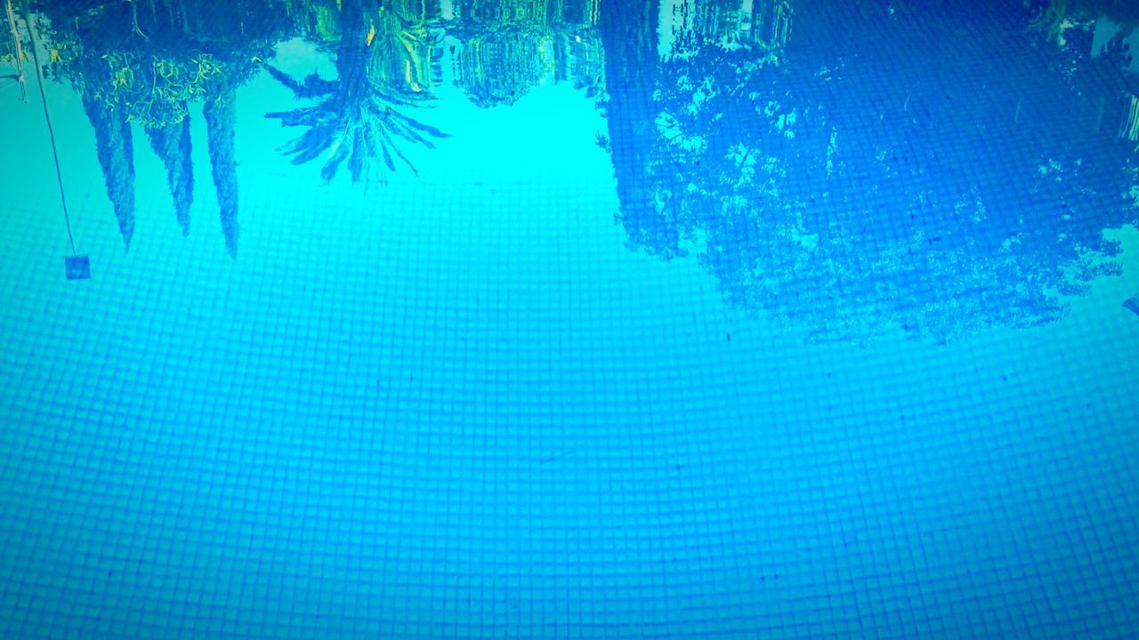 Reflection Of Trees In Swimming Pool