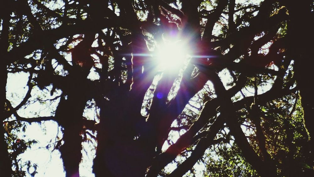 Nature Tree Low Angle View Sunlight Growth Nature Sun Beauty In Nature Outdoors Tranquility No People Day Sunbeam Branch Forest Photography Forest Forest Trees EyeEm Best Shots EyeEm Nature Lover Tree Sonyphotography Binsar Almora Binsar Forest