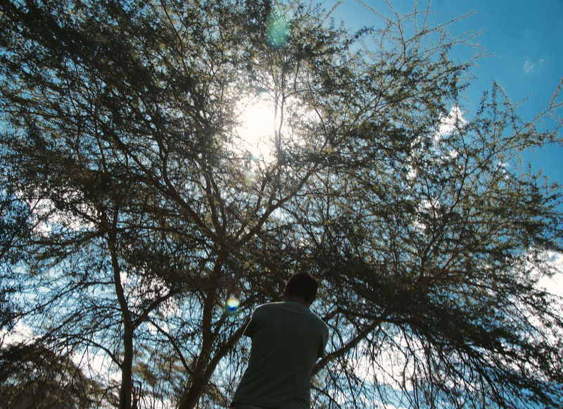 Shadows & Lights Sunlight Beauty In Nature Blue Sky Branch Bright Casual Clothing Day Leisure Activity Lens Flare Lifestyles Low Angle View Nature One Person Outdoors Plant Real People Rear View Sky Standing Sun Sunlight Tree