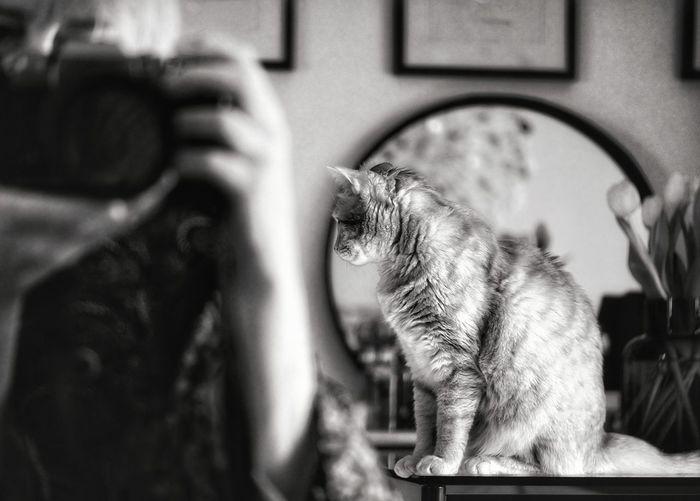 Close-up of cat looking through camera at home