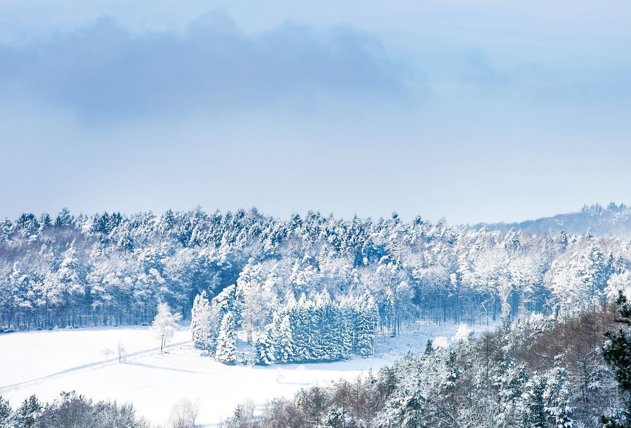 Scenic View Of Snow Covered Trees And Landscape