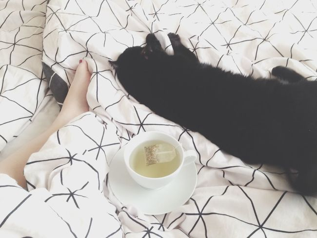 Morning Meandmygirl Cat Pet Tea Wonderful Morning