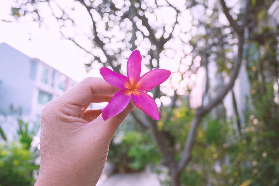 Hand Human Body Part Plant Holding Freshness Flowering Plant One Person Fragility Vulnerability  Flower Close-up Focus On Foreground Petal Nature Beauty In Nature Day Real People Body Part Pink Color Finger Flower Head Outdoors Purple Morning Light Autumn