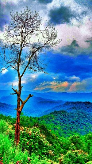 View at Range of Titiwangsa Nature Water Growth Tree No People Beauty In Nature Outdoors Day Green Color Tranquility Scenics Sky Close-up