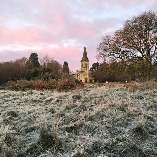 A wintery dog walk this morning. Dog Walking Winter Frost Tunbridge Wells Southborough Common