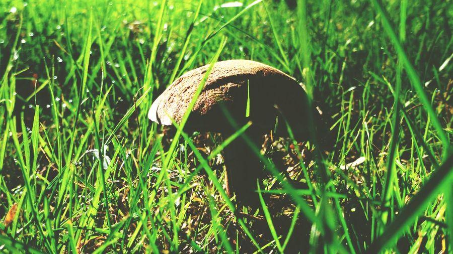 Autumn is near. Toadstool Fungus Mushroom Animal Themes Grass Close-up