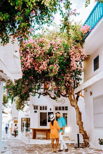 Town White Blue Vacation Greece Travel City Mykonos Mykonos,Greece Mykonos Island Mykonos Town Little Venice Mykonos Women Valentine Couples Couples In Love Valentine's Day  Man Woman Tree Pets Men Architecture Building Exterior Built Structure Blooming Petal Flower Head Urban Townhouse