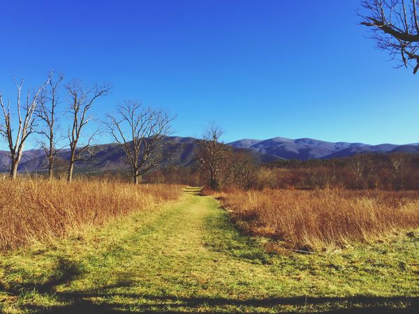 Nothing like the mountains.⛰ Eyeemnaturelover Great Smoky Mountains  Smoky Mountains Cades Cove Grass Landscape Tranquil Scene Nature Field Tranquility Blue Day Clear Sky Outdoors No People Mountain