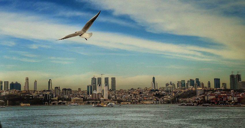 Istanbul Istanbul Turkey Istanbuldayasam Martı Boğaz Vapur Vapur Ve İstanbul