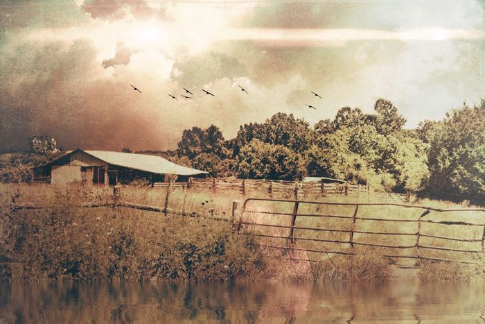 The farm house Check This Out Taking Photos Landscape_photography Morning Landscape Trees Woods Clouds And Sky Old Farm House