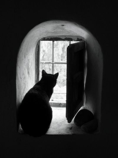 Sam's watch. Cat Cats Of EyeEm Cat Lovers B&w Cat Photography Cat World  Caturday Cat Watching Catlovers Catoftheday Cat Photography Catlover Black Cat Watching Cat Catportrait Cat Sitting In Window Cat Silhouette Samwise The Cat Robin Fifield - Cats. Andalucia Rural Awehaven's Andalucia Awehaven Creative Pet Portraits