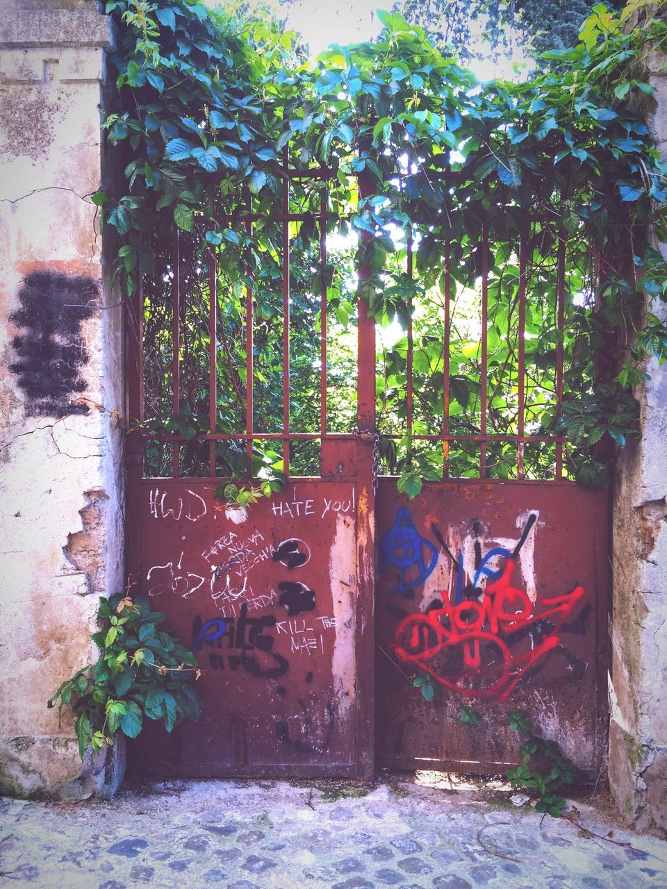 graffiti, tree, text, day, outdoors, growth, no people, plant, built structure, architecture, building exterior, nature
