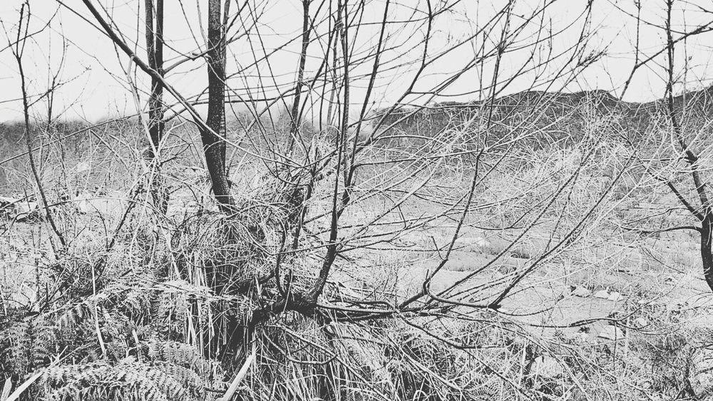 Blackandwhite Hugging A Tree Open Edit Popular Photos Eye4photography  Hello World