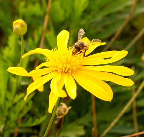 Working in a perfect environment is what humans should always do to be happy Bee Macro Nature Flowers EyeEm Nature Lover EyeEm Best Shots Taking Photos Enjoying Life Relaxing Flower