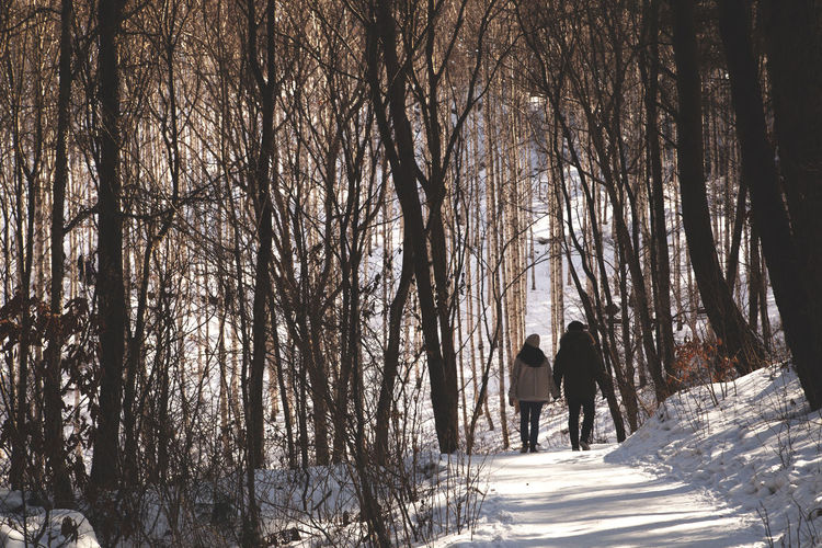 Rear View Of People Walking On Snow Covered Forest