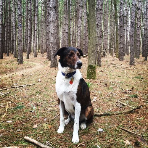 Cute Forest Dog
