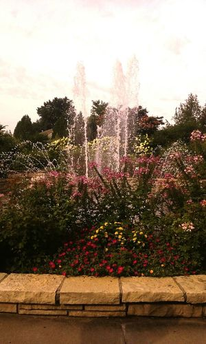 Water Fountain Water Fountain Fountains Fountain_collection Flowers Flower Flower Collection Nature Nature_collection Nature Photography