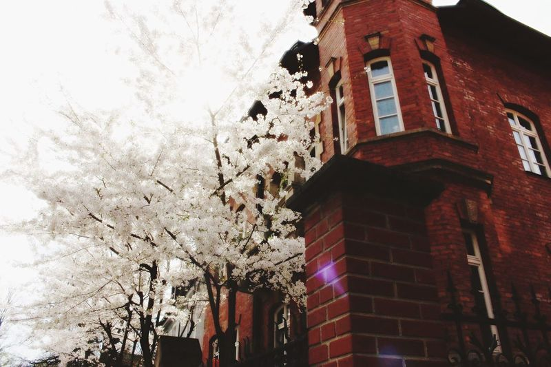 Low Angle View Tree No People Outdoors Day Sky Nature Building Exterior Tree Springtime Spring Flowers Spring Has Arrived EyeEmNewHere