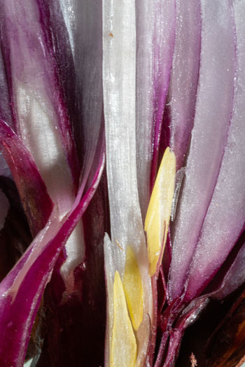 Useless Onion Onion Onions Vegetables Directly Above Vegetable Waste Beauty In Decay Close-up Full Frame No People Food Beauty In Nature Food And Drink Backgrounds Plant Inflorescence Pink Color Vulnerability  Fragility Nature Purple