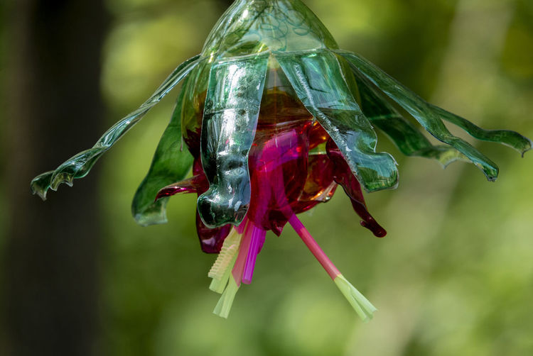 Split bottle Close-up Green Color Red Plant Art Street Art Craft Rubbish Trash Plastic Bottle Artificial Flower Green And Red Hanging Down Arts And Crafts