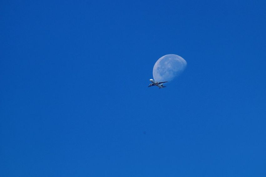 Moon_of_the_day Flying To The Moon Flying In The Sky Airplane In The Sky Half Moon EyeEm Nature Collection Nature Photography EyeEm Nature Lover Nature Nature_collection Nature On Your Doorstep Taking Photos Colour Of Life Airplane Clear Sky Moon Surface Moon_collection Moon Shots Moon Flying Over Your Imagination Flying High Decisive Moment Chance Encounters