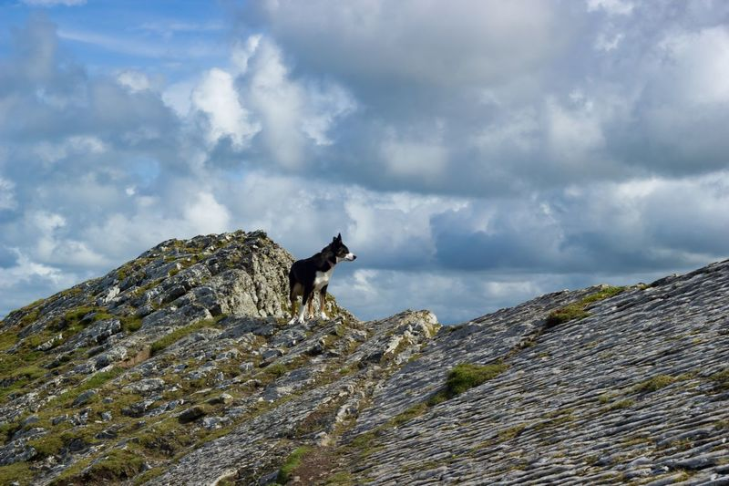 Border Collie Mountain Top One Animal Animal Themes Cloud - Sky Sky Day Mammal Rock - Object Domestic Animals Outdoors Nature No People Low Angle View Mountain Landscape Pets Animals In The Wild Beauty In Nature This Week On Eyeem