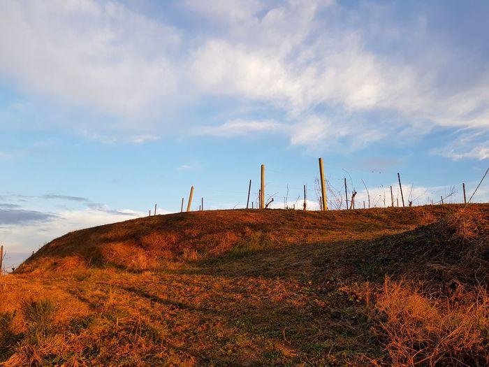 Golden Hour Wind Turbine Wind Power Rural Scene Industry Sky Landscape Cloud - Sky