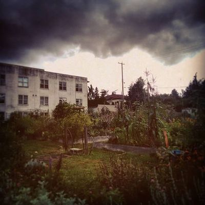 Community Garden @ Oak & W16th Soullessphotography Phoneography Instagram Vancouver Canada EyeEm