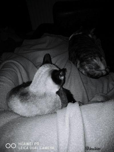 Domestic Cat Feline Tranquility My Kitty 😍,My Praline