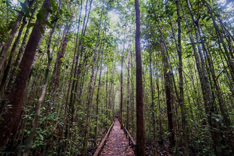 Tree Forest Nature Growth Low Angle View Green Color Beauty In Nature Bamboo Grove Bamboo - Plant Tranquility Outdoors Tree Trunk Day No People Full Frame Backgrounds Branch Sky