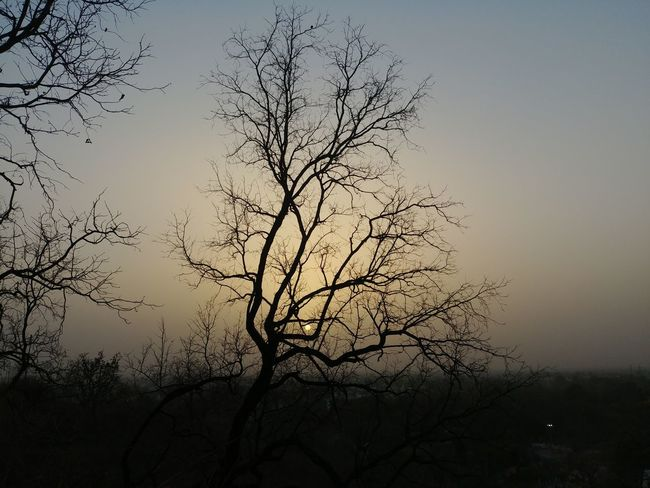 Tree Plant Sky Nature Branch Beauty In Nature Tranquility Bare Tree No People Silhouette Outdoors Tranquil Scene Environment Sunset Scenics - Nature Landscape Sun