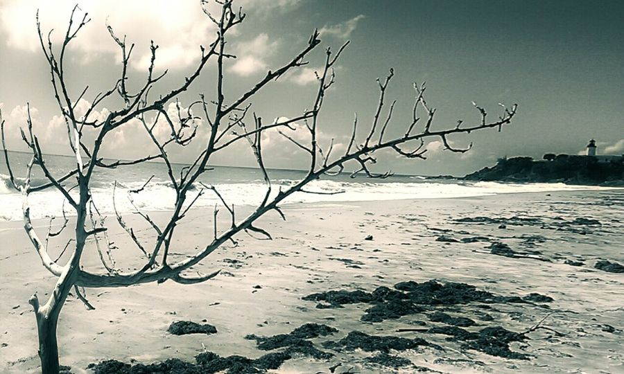 Beach Nature Landscape Fotodroiding