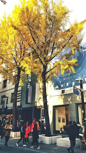 Insadong Shopping Cultural History New And Old Autumn2014 Seoul Ginkgo Tree South Korea Travel Photography Streetphotography