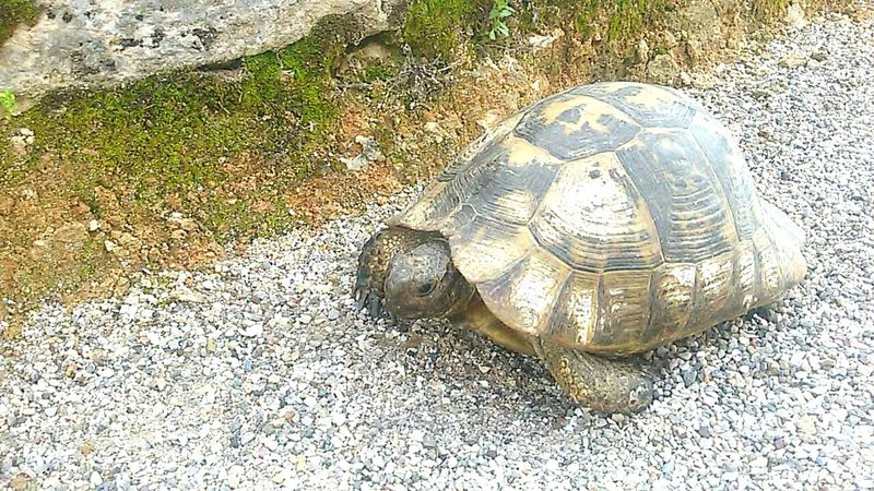 Animals Turtle Türkei Tortoise Nature Fotography Urlaub Perge Nature_collection Turtles