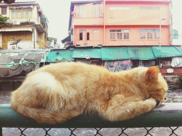Cat lying on wall