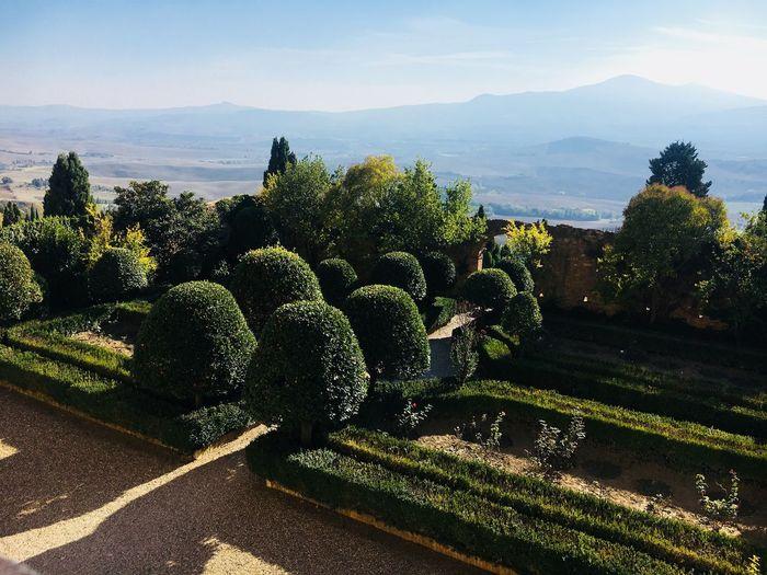 Giardino Palazzo Piccolomini Plant Sunlight Water Nature Sky Tree Growth