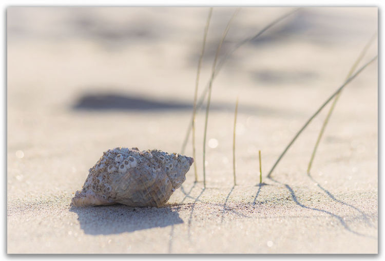 Beach Close-up