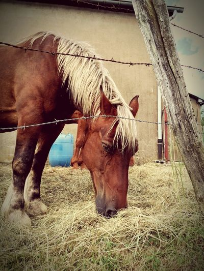 Horse Cheval Horses Nature Nature_collection EyeEm Nature Lover Naturelovers