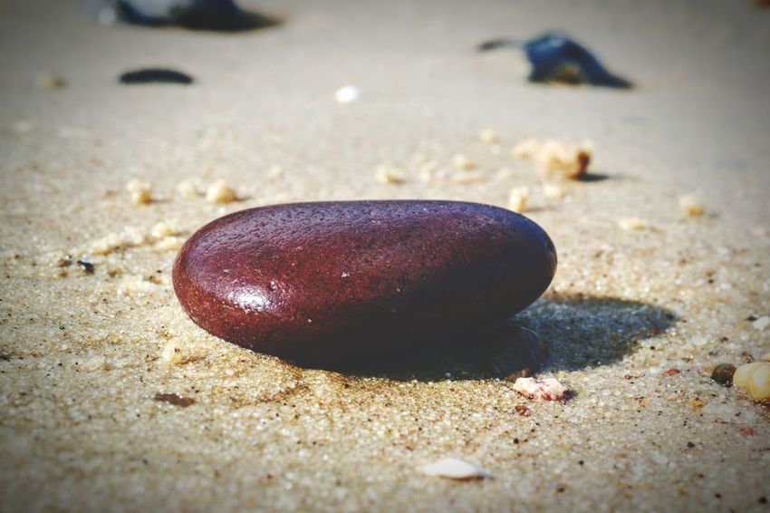 Sand Beach Close-up Day Nature No People Outdoors Sea Sea Life Animal Themes Stones Seaside