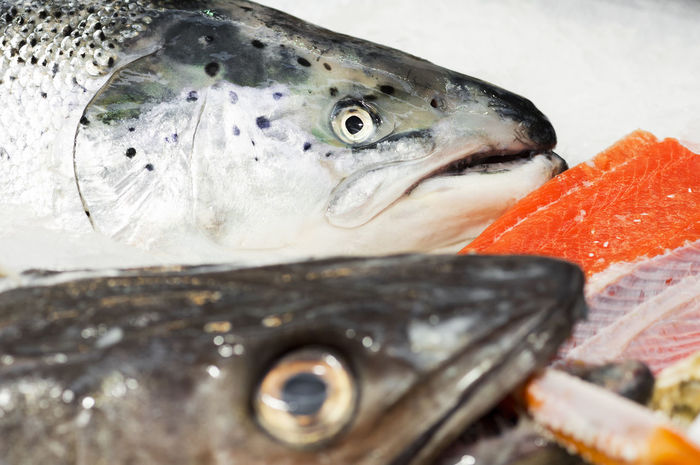 fresh salmon head in fish market close up Catch Of Fish Close-up Cold Temperature Fish Food Food And Drink Freshness Healthy Eating Ice No People Norwegian Outdoors Raw Food Salmon Salmon - Seafood Sea Fish Seafish Seafood Seafood Wild Salmon
