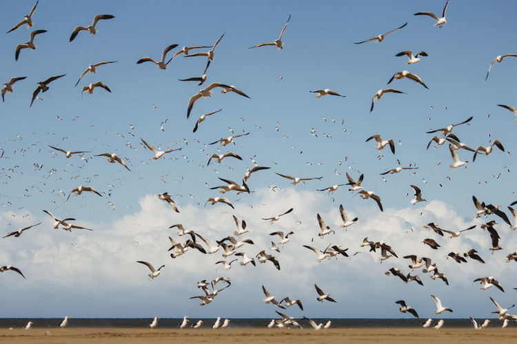Animals In The Wild Animal Themes Animal Animal Wildlife Large Group Of Animals Bird Group Of Animals Vertebrate Flock Of Birds Flying Sky Nature Day Spread Wings Mid-air Motion No People Water Beauty In Nature Outdoors Seagull