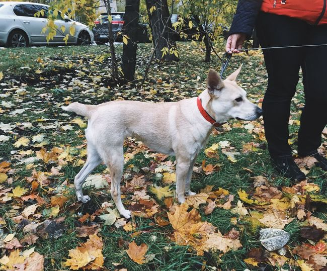 Autumn Dog Leaf Pets Domestic Animals One Animal Standing Real People Change Outdoors Pet Leash Walking Day Low Section Mammal One Person Nature Human Leg Men Adult EyeEm Gallery EyeEm Best Shots