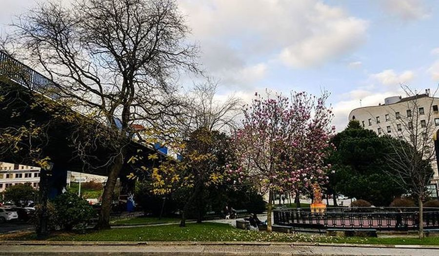 """Estamos aún en invierno pero parece que ya se asoma la primavera"" 💕🌳 Coruña Nature Naturelovers Natureonly TagsForHearts Nature_seekers Nature_perfection Natureporn Naturephotography Lifeinism Naturegram Clouds"