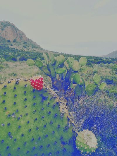 El corazón de Copilli. _________________________________Nature Natural Naturaleza Nature Photography Nature_collection Naturelovers Mexico_maravilloso Mexico Y Su Naturaleza Mexicoandando Tuna Nopal