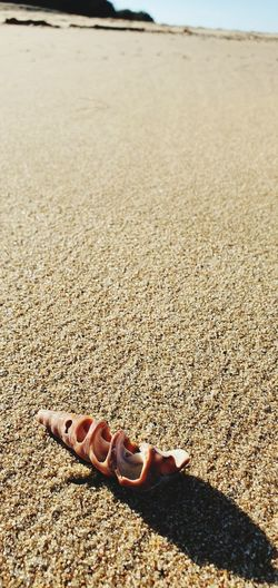 High angle view of person on sand at beach