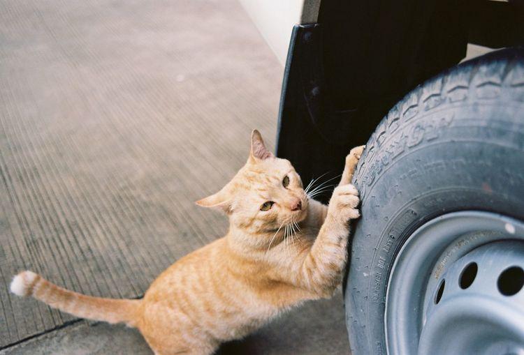 Cat sitting in a car
