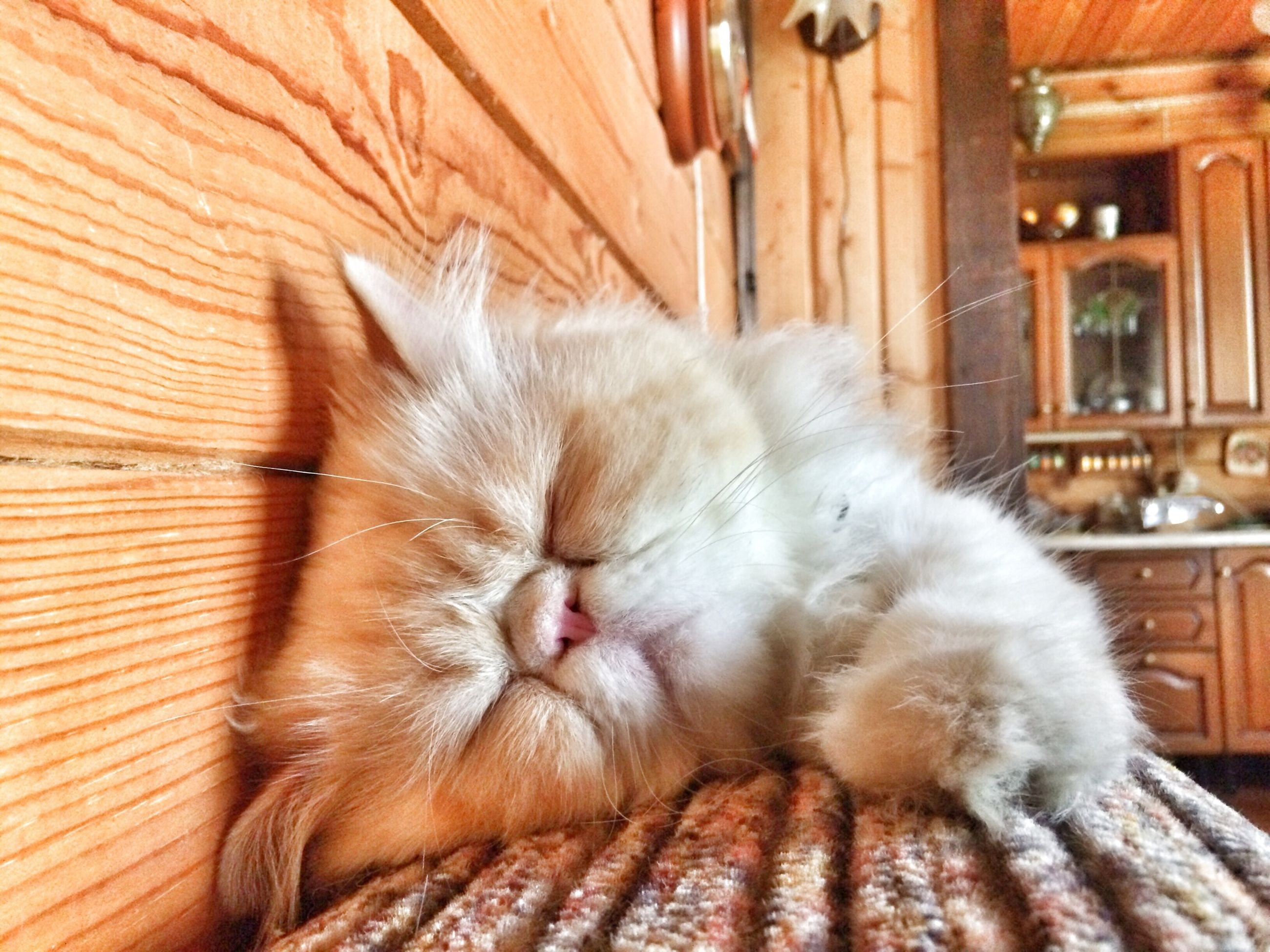 animal themes, domestic cat, domestic animals, mammal, pets, cat, one animal, feline, indoors, sleeping, relaxation, whisker, resting, eyes closed, lying down, home interior, close-up, no people, zoology, animal head