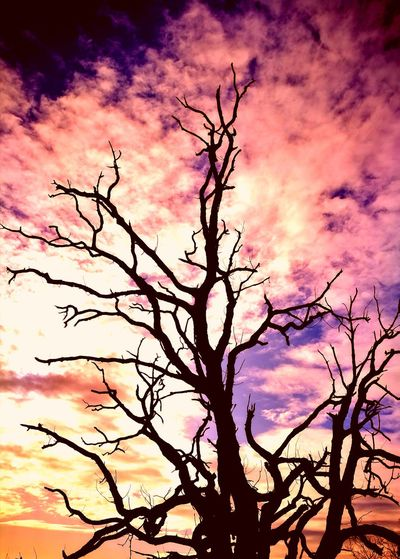 Low angle view of tree against dramatic sky